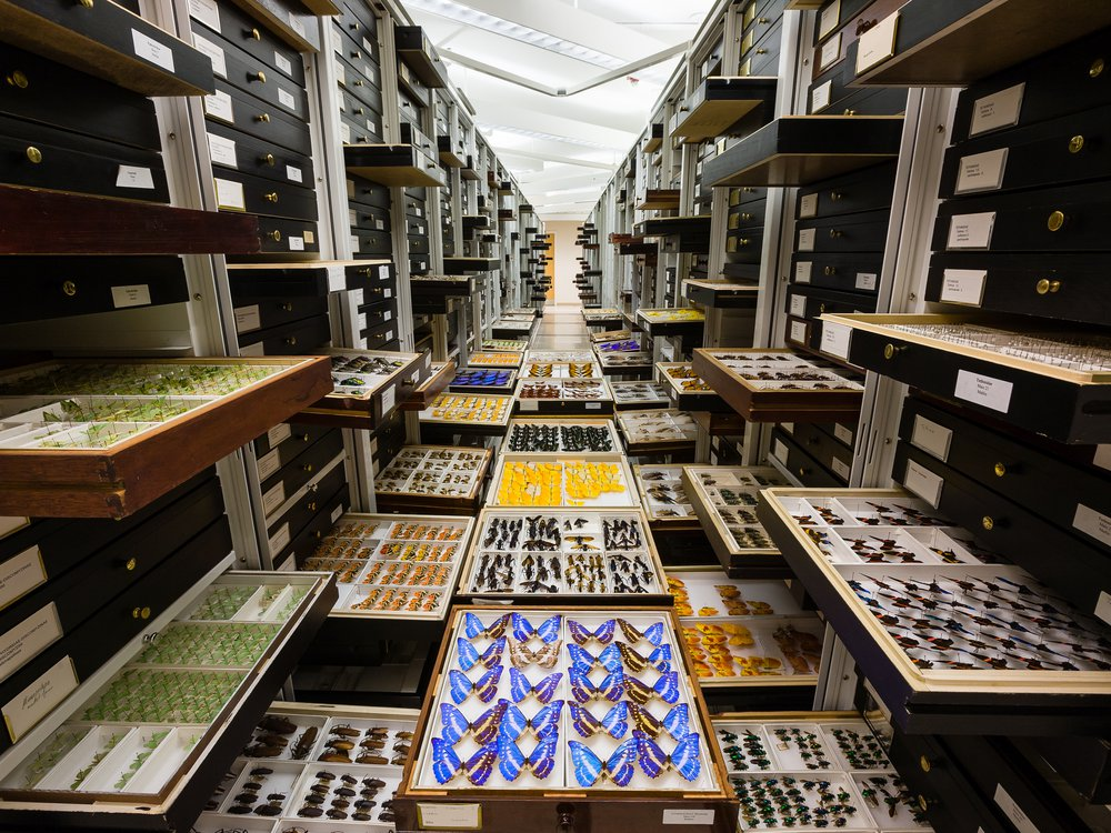 The National Museum of Natural History's 146 million objects and specimens are studied by researchers worldwide who are looking to understand all aspects of the natural world. (Chip Clark, Smithsonian)