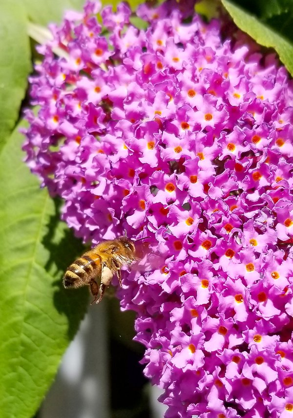 Wasp on a purple flower thumbnail