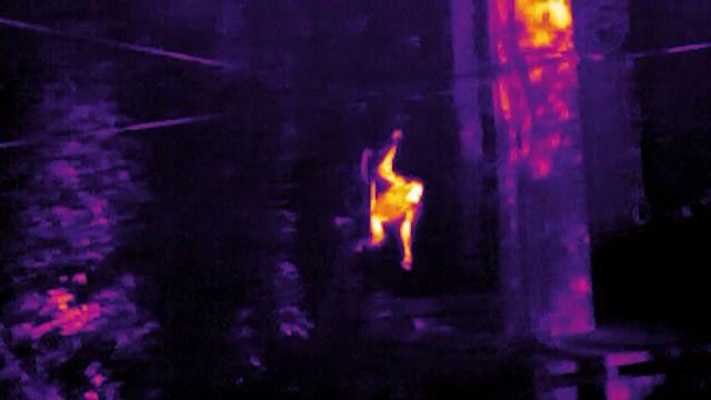 Thermal Orangutan