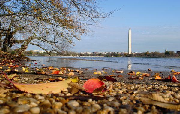 The Beach-like Floody Tidal Basin with the Colorful Fall Foliage thumbnail
