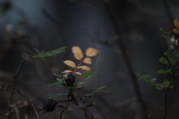 An autumn berry thumbnail