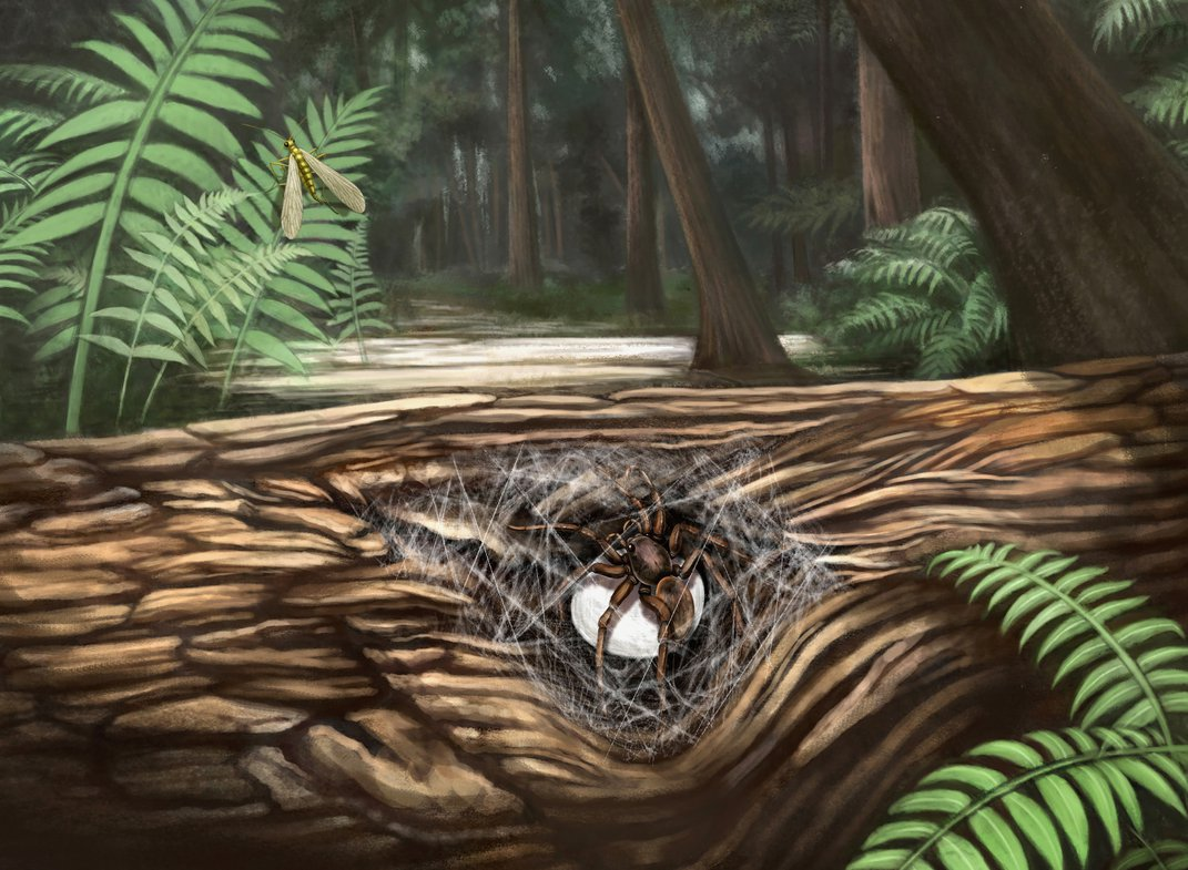 Female Spiders' Maternal Instincts Captured in 99-Million-Year-Old Amber