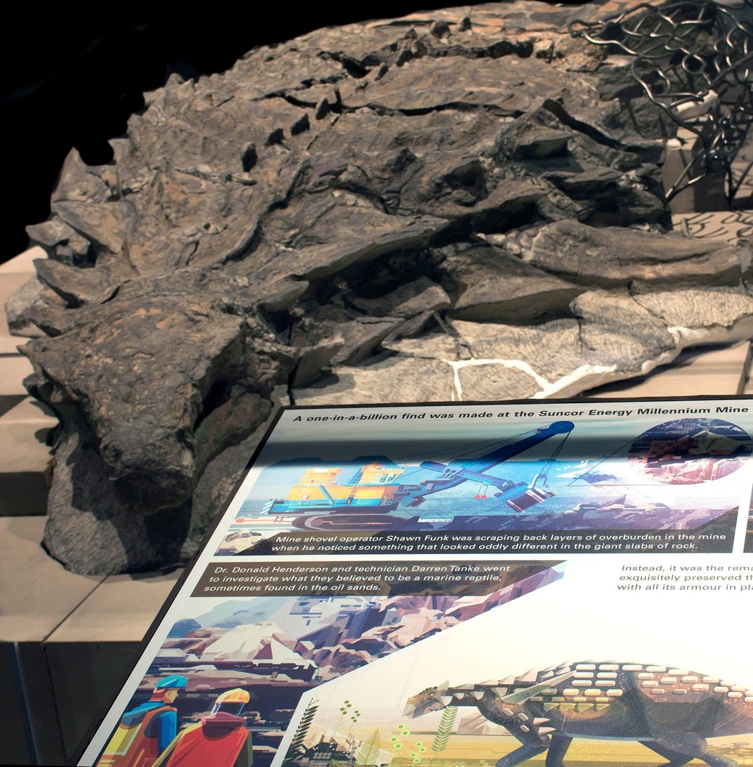 """Spectacularly Detailed Armored Dinosaur """"Mummy"""" Makes Its Debut"""