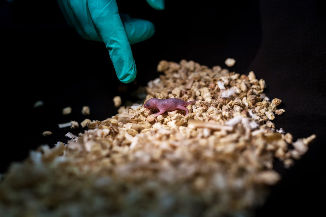 Scientists Break the Rules of Reproduction by Breeding Mice From Single-Sex Parents