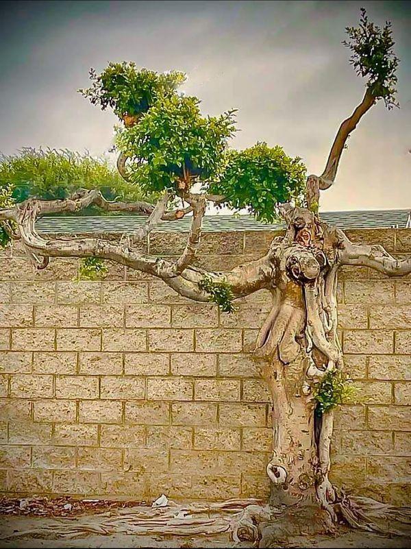 Tree-like a human thumbnail
