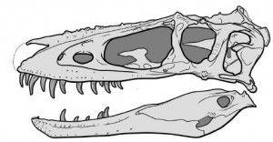 20110520083151alioramus-altai-skull-300x156.jpg