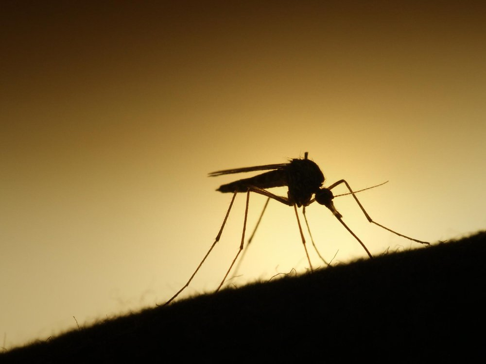 mosquito about to bite.jpg