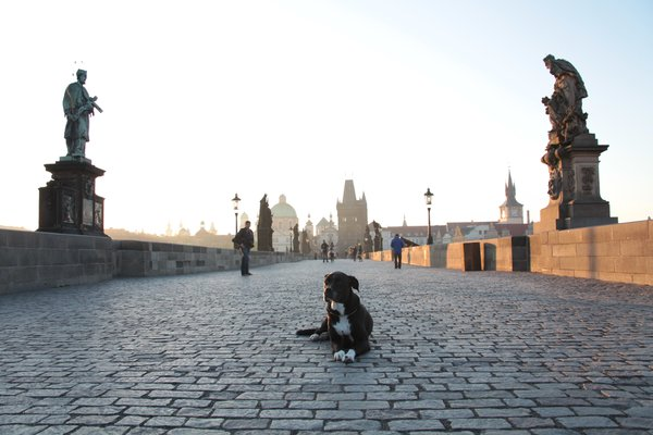 My dog, Rolfie, on the Charles Bridge at dawn. thumbnail