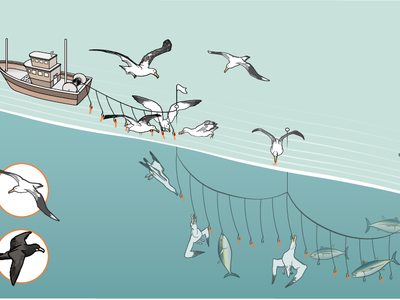 Small fixes can keep birds from being snagged by fishing lines, which also helps fishing vessels not lose bait to the flying foragers.
