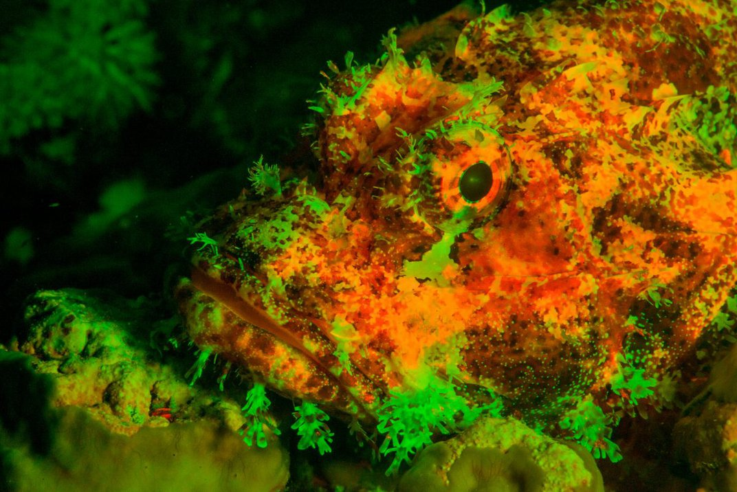 Amazing Photos Reveal the Hidden Light of Undersea Life