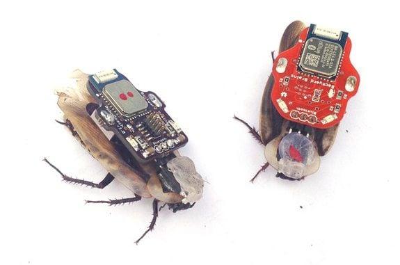 The RoboRoach