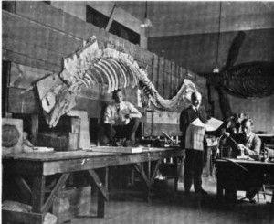 20110520083137tylosaurus-skeleton-smithsonian-300x245.jpg