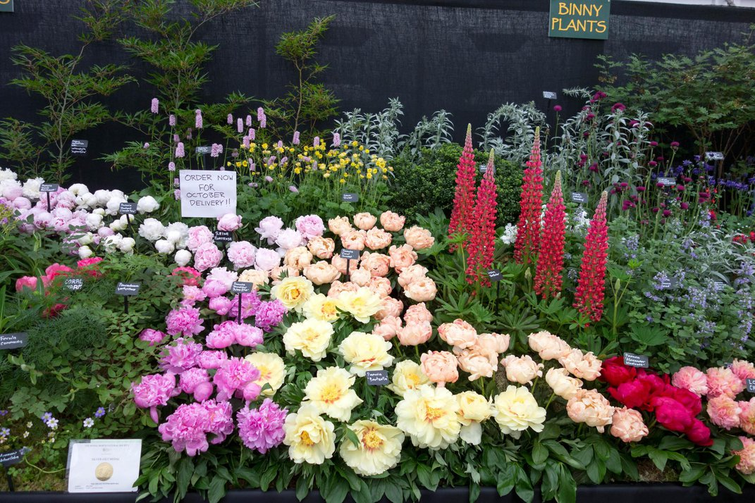 Watch These Six Flower Bloom Events From Your Couch