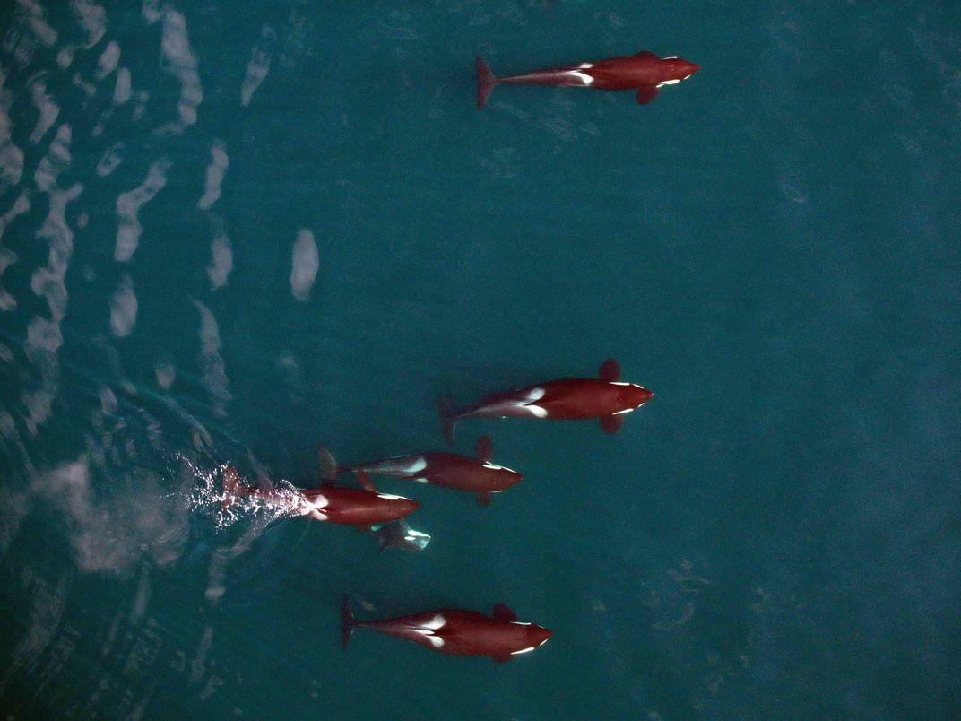 How Drones in the Sky Unlock Secrets of the Sea