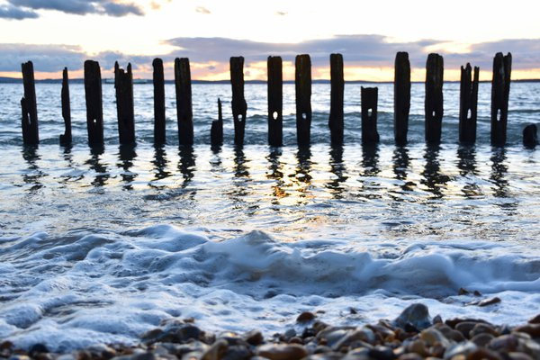 Ancient sea weathered timbers thumbnail