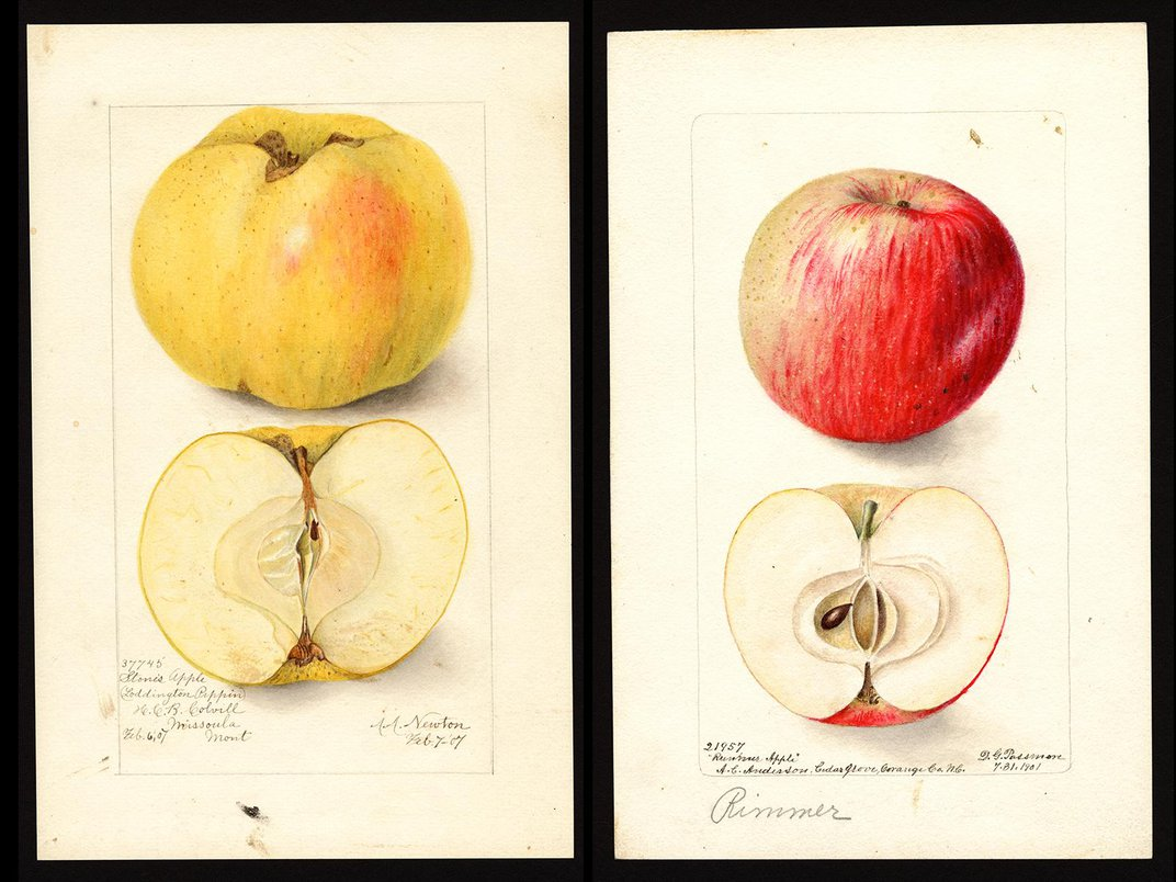 Ten Apple Varieties Once Thought Extinct Rediscovered in Pacific Northwest