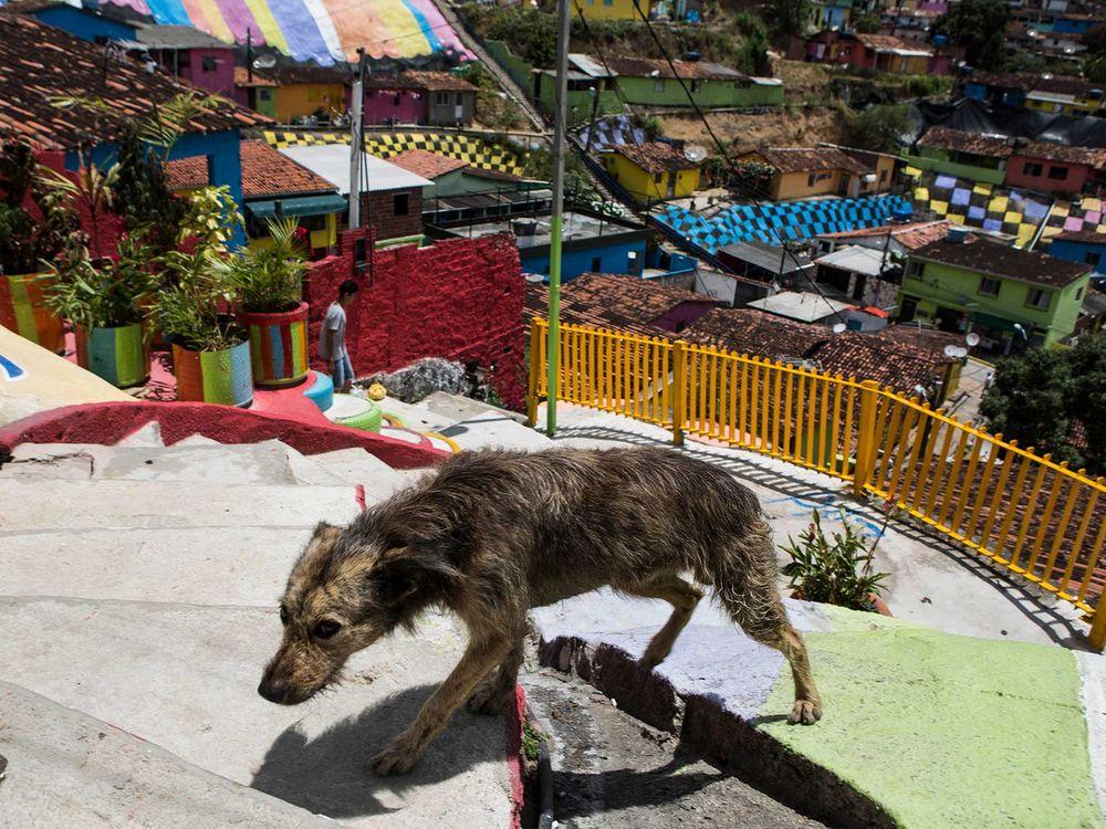 Dog in Favela