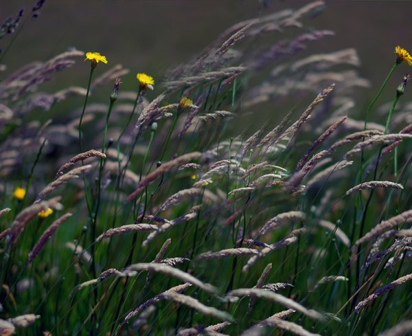 Flowers and Grasses thumbnail