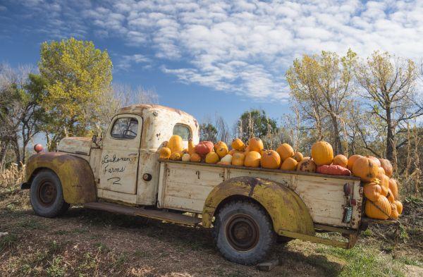 Pumpkinland thumbnail