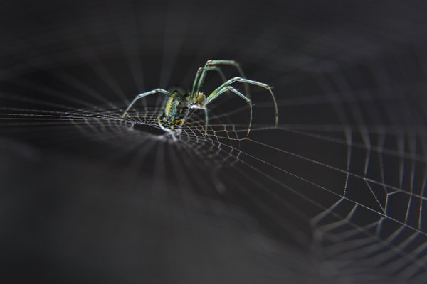 Intricate work of a spider thumbnail