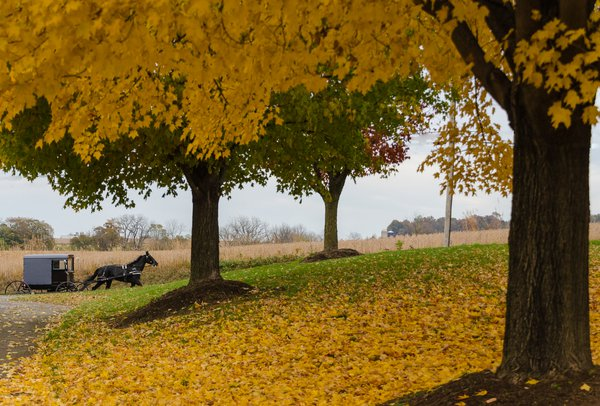 Amish buggy in autumn thumbnail