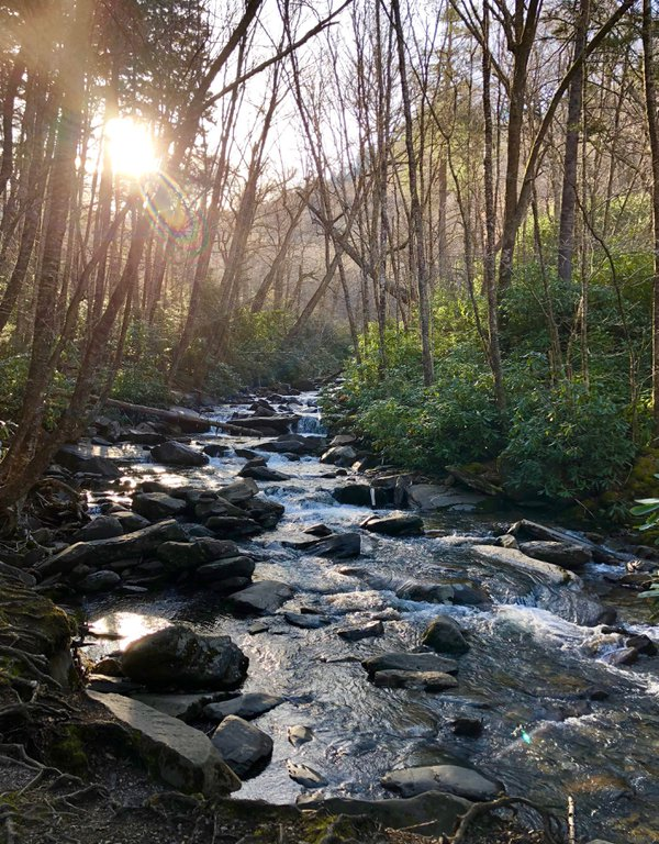 Walker Camp Prong in Great Smoky Mountains National Park thumbnail