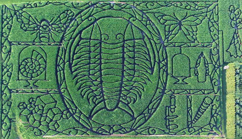 Trilobite Maze