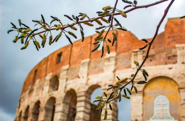 Moody Colosseum thumbnail