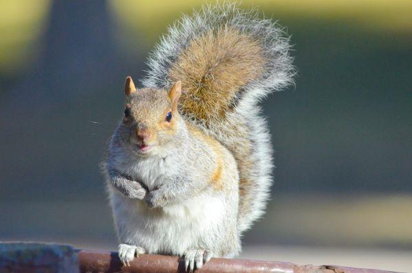 A Squirrel Smile thumbnail