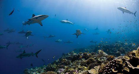 On Wednesday, June 8, at 6:30, meet ocean explorer Enric Sala at the Natural Museum.