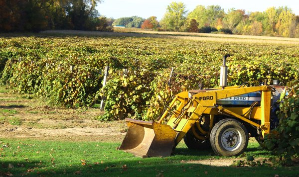 A Tractor Among the Vineyards thumbnail