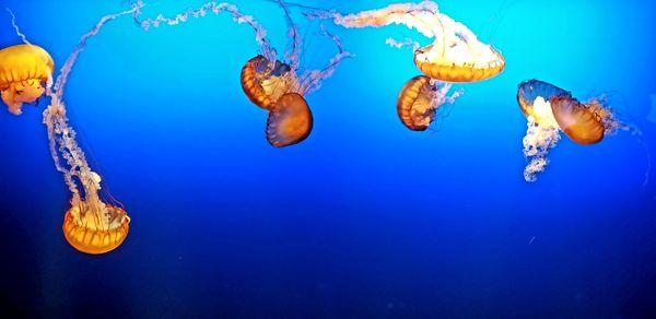 Freefloating Jellyfish thumbnail