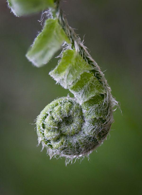 fibonacci spiral thumbnail
