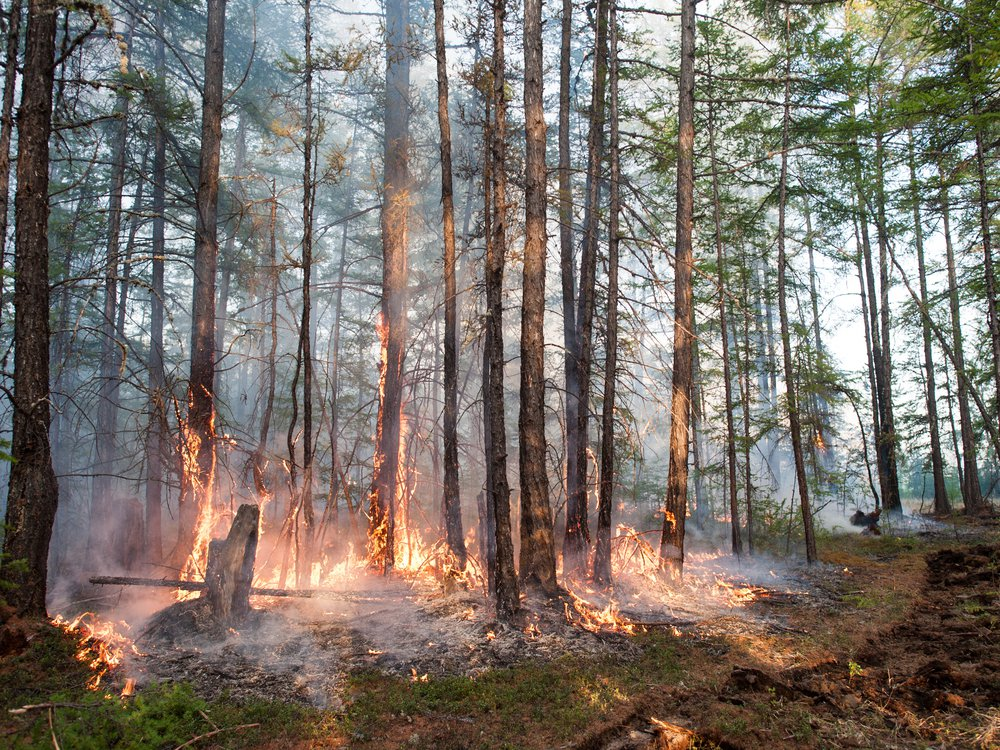 Forest fire in Siberia