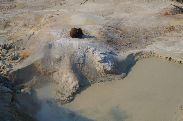 Mud-Cauldron Bison thumbnail