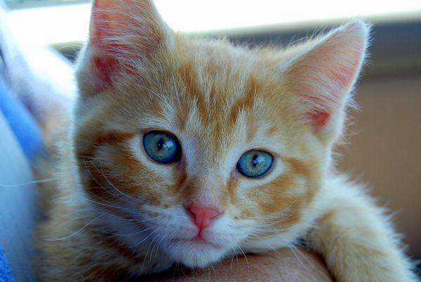 Kitten's First Day thumbnail