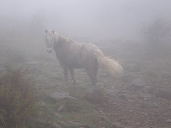 Pony in the mist thumbnail