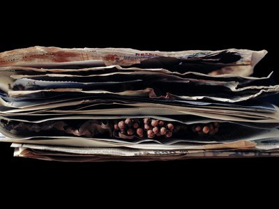 Liz Orton photographed seeds sent to Kew Gardens in London as long as a century ago.