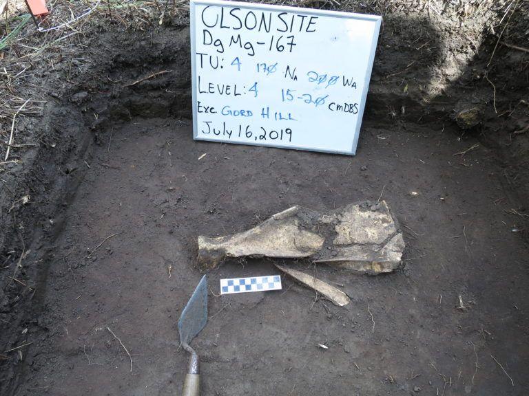 Centuries-Old Gardening Hoes Made of Bison Bone Found in Canada