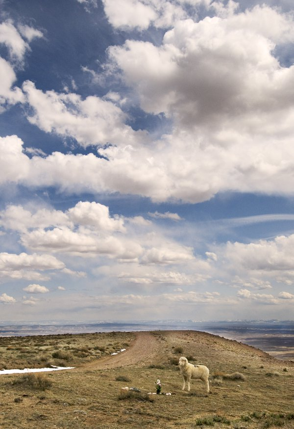 A lone sheep pays respects in the high desert of northern Colorado thumbnail