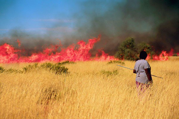 Landscapes have been managed by humans for thousands of years – some sustainably, others less so. The Martu people of Australia burn the grasses in continent's Western Desert. The practice yields food, but also increases biodiversity in the area. (Rebecca Bliege Bird)