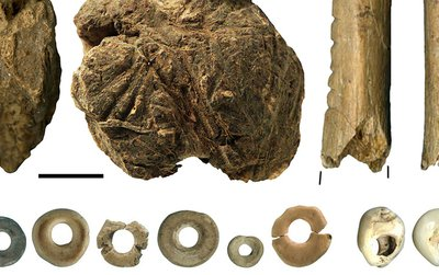 Organic tools found at South Africa's Border Cave include (a) wooden digging sticks, (b) poison applicator, (c) bone arrow point, (d) notched bones, (e) lump of beeswax mixed with resin and (f) beads made from marine shells and ostrich eggs.