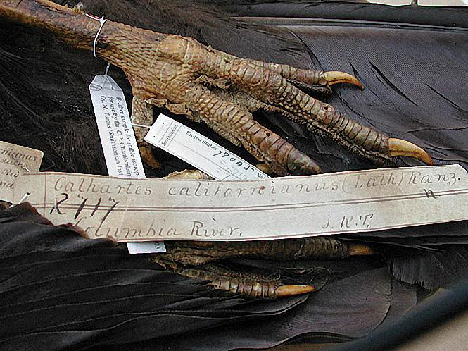 Birds Collected Nearly Two Centuries Ago Still Help Scientists Today