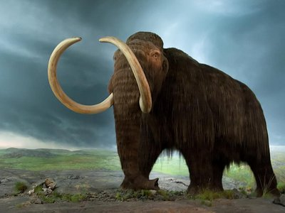 Could we bring back the woolly mammoth?