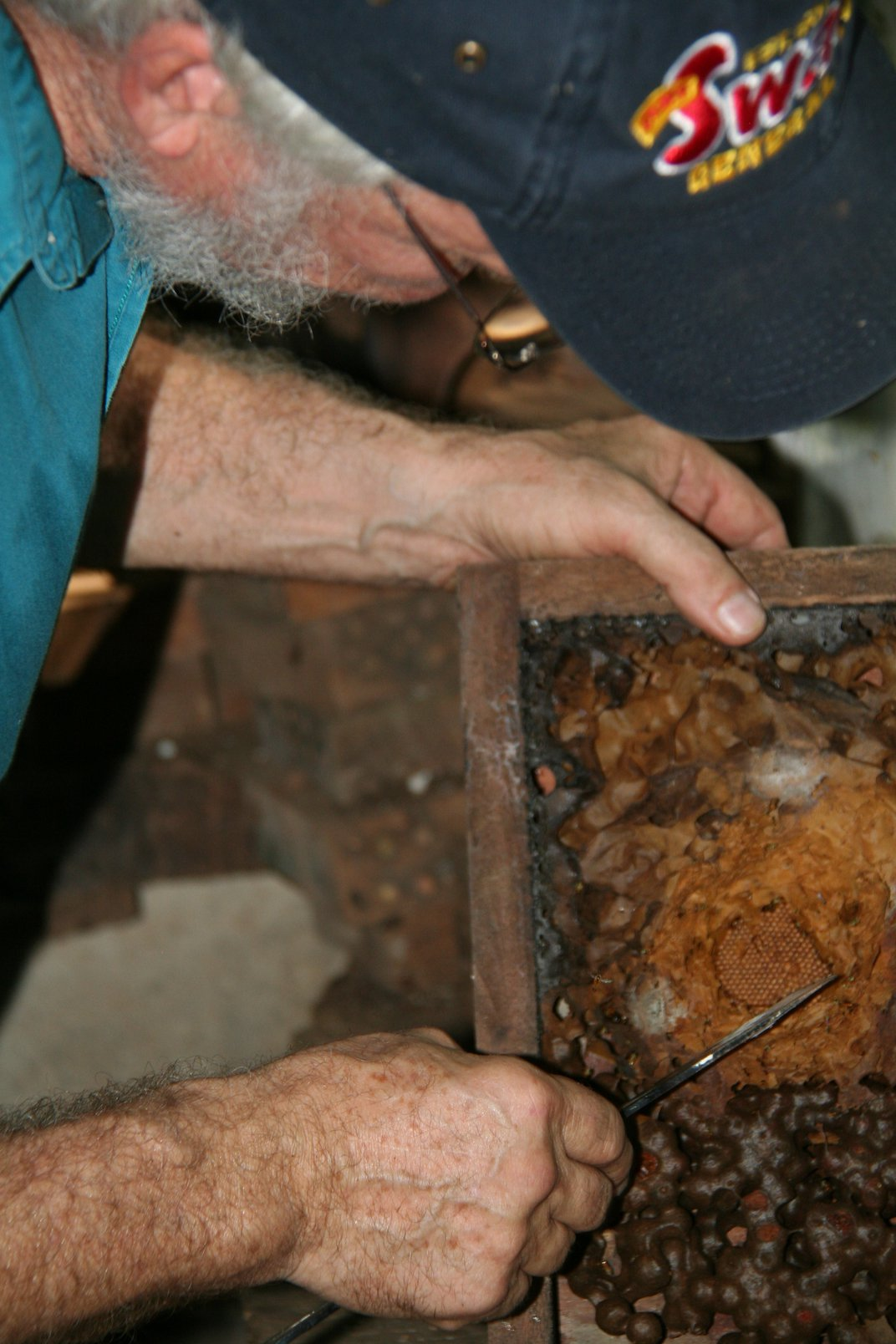 Smithsonian's Bee Man Delivers Up Some Advice for Dealing with Colony Collapse Disorder