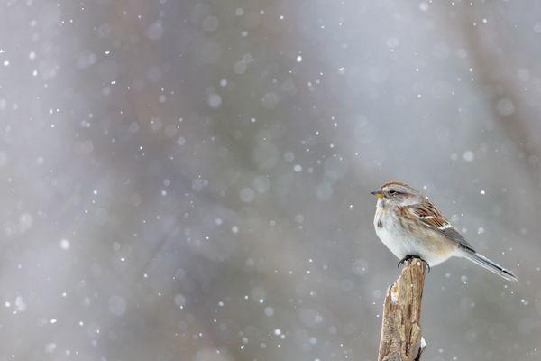 Snow Lover thumbnail