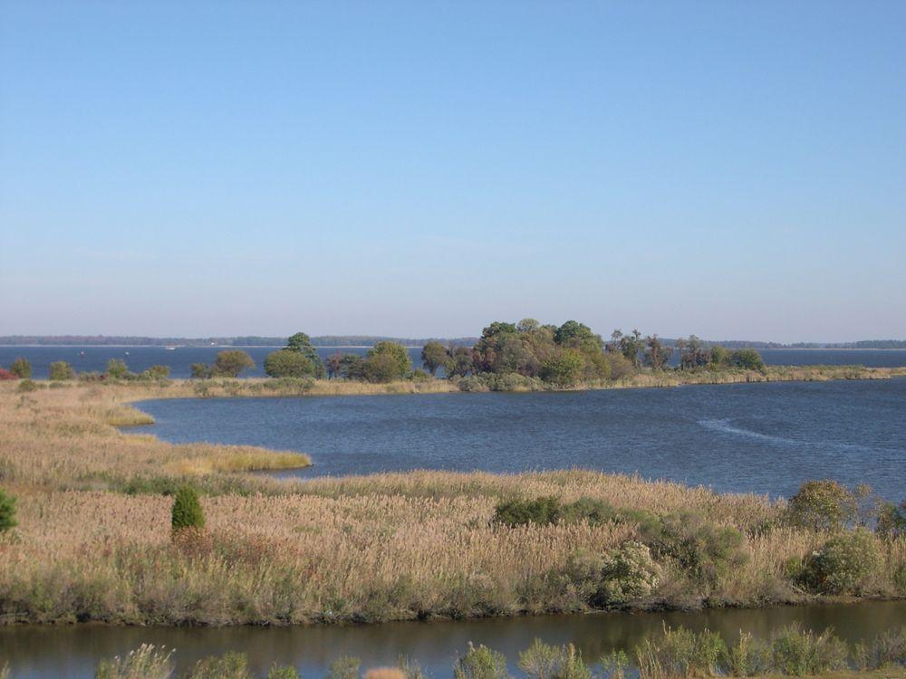 Tidal wetlands of the Chesapeake Bay