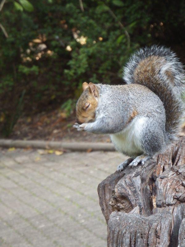 The Praying Squirrel thumbnail