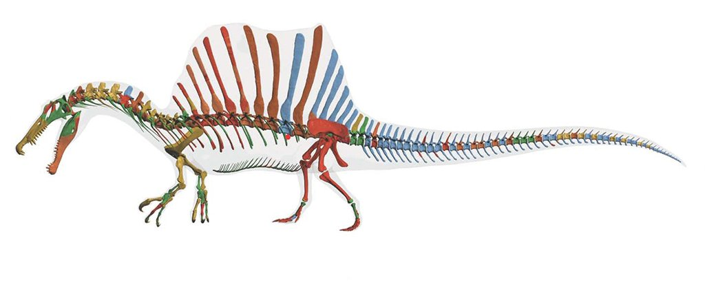 Meet the Mighty Spinosaurus, the First Dinosaur Adapted for Swimming