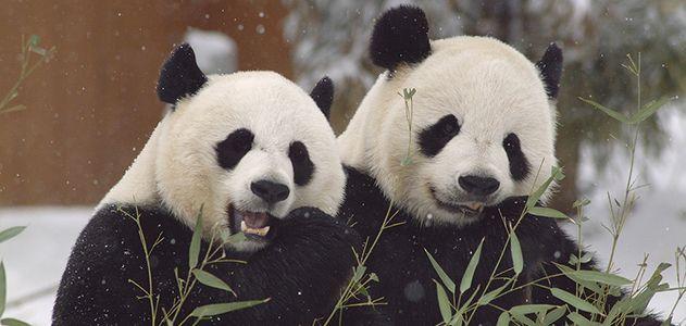 Around-Mall-Pandas-631.jpg